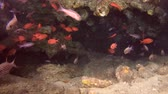 askerler : Life in underwater cave - Indian Ocean, Maldives, Asia Stok Video