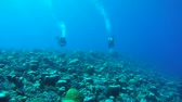 ток : Two scuba diver swim on current, over a coral reef of an unusual formation - Indian Ocean, Fuvahmulah island, Maldives, Asia Стоковые видеозаписи