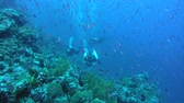 fusilier : Three scuba divers swim inside a flock of fusiliers next to a coral reef, Dark Banded Fusilier - Pterocaesio tile. Indian Ocean, Fuvahmulah island, Maldives, Asia Stock Footage