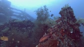 wreck dive : USAT Liberty - Bali, Oceania, Indonesia Stock Footage