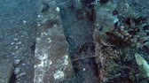 toxicant : Lionfish and other tropical fish swim above the concrete beams on the seabed. Red Lionfish - Pterois volitans, Bali, Oceania, Indonesia Stock Footage