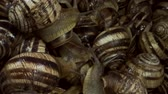 деликатес : A group of food snails. Background of live wet snails. Extreme close up, macro 1: 1. Top view? 4K  60fps