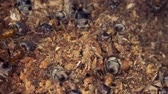 vaidade : A colony of ants on a rotten stump. Super macro? 60fps Vídeos