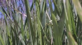 Movement upward along green grass to blue sky. Camera moves upwards, Low-angle shot, Close-up, Full HD - 60fps
