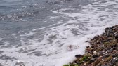 Waves on the coast. Close-up, Full HD - 60fps Vídeos
