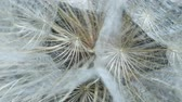 flower bed : Details of seed-head flower. Rotating seedhead, Extreme close up. Rotation 360 degrees
