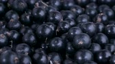 se movendo para cima : Detail of fresh blackcurrant. Macro trucking shot. Camera moves sideway to the diagonal. Soft focus, Close up. Black currant or blackcurrant (R?bes n?grum)