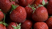 fragaria : Sideways movement along ripe strawberries. Close up, natural background. Camera moves sideway to the right side. 4K - 50fps Stock Footage