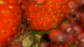 メロウ : Juicy ripe strawberries washed water with splashes and bubbles. Extreme close-up. Slow motion, Underwater split level