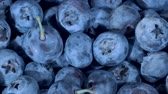 メロウ : Detail of Blueberries. Macro Rotate of blueberries. Close-up, Camera moves backwards. Bog bilberry, bog blueberry, bilberry or western blueberry (Vaccinium uliginosum) 動画素材
