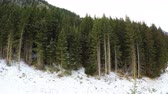 Panorama Shot Of Snow Covered Forest During Winter 4K Vidéos Libres De Droits