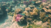 Colorful Tropical Fish Swim Around Vibrant Coral Reef