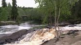 tranquilo : River in the forest.Wilderness.Nature. Stock Footage