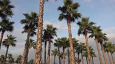 эт : Panorama palm trees on blue sky background.