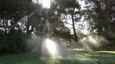 water pump : Watering The Garden. Sprinkler irrigation of the lawn. Stock Footage