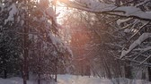 no people : panorama of winter forest with snowy trees, path, pink sunny blurs, in sunset