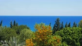 maritime territory : landscape of bright blue sea and different green trees,windy weather, clear blue sky, summer day