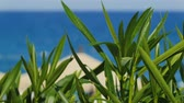 maritime territory : shot of mediterranean coast, focus moving from sea to leaves of plant at a first, sunny weather