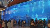 seascape : DUBAI, U.A.E. - JAN, 2018: visitors of Dubai mall and tourists are watching fishes in a huge aquarium Stock Footage