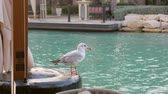нахальный : cute seagull is sitting on embankment of sea canal in daytime in touristic place near restaurant