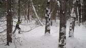 meia idade : the skier skates in the woods, through the trees