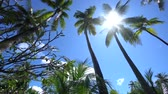 Sun breaks through palm leaves in tropical Bahamas island in Carribean sea 4K Footage