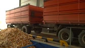 biomassa : Truck with corn comes to weight after harvest footage