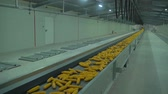 biomassa : Corn move to thelong tape conveyer in plant after harvest HD footage