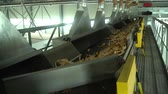 Corn is moving to tape conveyor with compartments which separete it in different places HD Slow motion