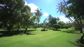 liść laurowy : Paradise place from gimbal behind palms to the national park in Maldives island smooth shoot 4K footage
