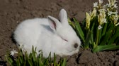 miniatura : Little rabbit sits in white flowers, 4 in the video