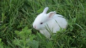 魅力 : Little rabbit on green grass