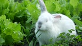 decorative rabbit : Little funny rabbit on the field in summer