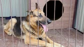стенд : German Shepherd behind the bars. Dog in a cage in a shelter for dogs