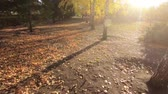 City Park in the fall. Yellow leaves on birch. Green spruce. Accelerated camera movement.