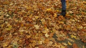 chutando : Guy kicking autumn fall leaves in park 4K