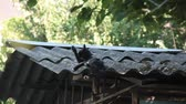 schist : Bareboned cat on the roof