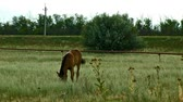 playful : Alone horse eating at a rural field. High definition footage.