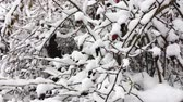 Ice and snow covered plants at winter Stock Footage