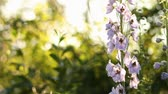 scratchy : flowers in the garden Stock Footage