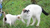 católico : Young cat and Baby Cat Playing in garden at Phattalung province of southern Thailand.