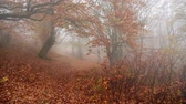 Autumn fog forest, blowing in the wind and falling foliage. Vídeos