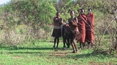 expression : NGORONGORO, KIGALI, TANZANIA - CIRCA DEC, 2011: People of Maasai tribe during wedding ceremony jumping and singing. Men warriors standing opposite to several women