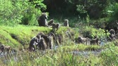 живая природа : Troop of baboons on a hill, Tanzania, Africa