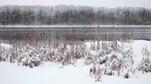 quiet : Open water lake at winter season with snow covered pines on shore, Karelia, Russia
