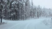road : Camera moving on winter forest road in evergreen woods of Karelia, Russia Stock Footage