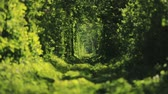 bilinen : Beautiful tunnel of green trees . Tunnel of love. Old abandoned railway line, in the alley of green trees. Stok Video
