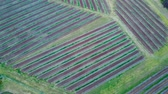 naturalistic : Agricultural fields in Australia in the evening. Aerial top view. Stock Footage