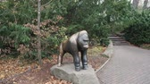 BERLIN, GERMANY - NOV 23, 2018: Statue of a gorilla in the Berlin zoo. Стоковые видеозаписи