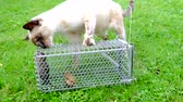 mouse : Cat catch rat in a cage Stock Footage